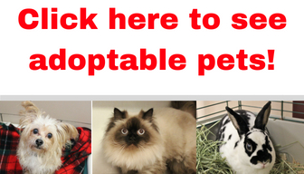 Click here to see adoptable pets