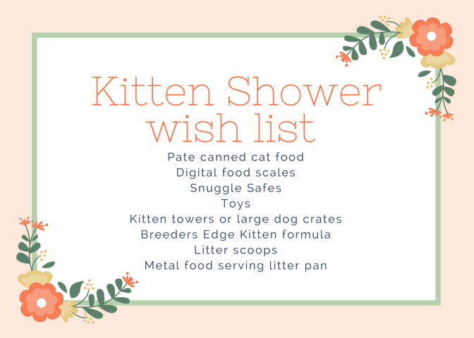 kitten wish list