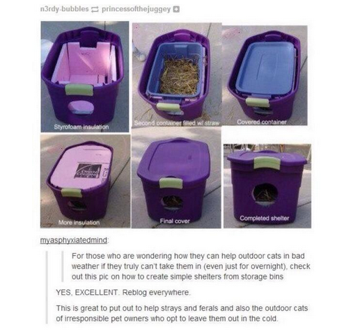 Making An Outdoor Cat Shelter