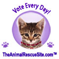 120x120_EveryDayCat_ShelterChallenge2011